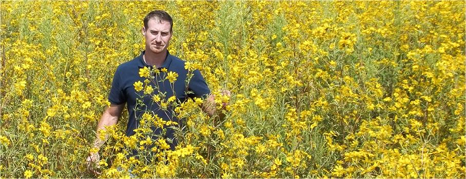Man in field of botanicals